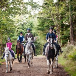Horse Riding on the Tamar Trails